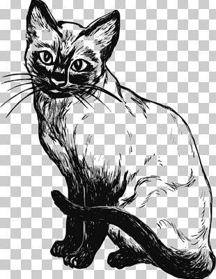 Siamese Cat Kitten Black And White Black Cat PNG