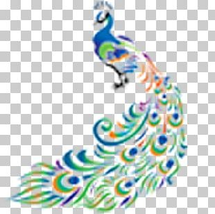 Bird Drawing Peafowl PNG