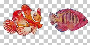 Watercolor Painting Clownfish PNG