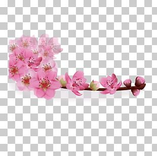 Flower Greeting Card Stock Photography Gift PNG