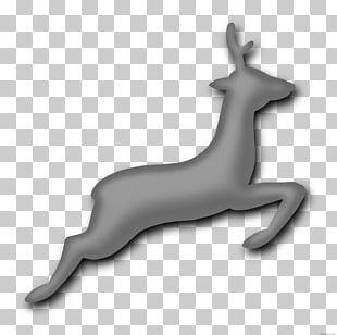 Reindeer Red Deer White-tailed Deer Antler PNG