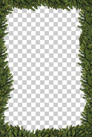 Christmas Tree Star Of Bethlehem PNG