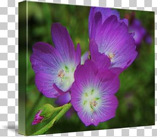 Violet Plant Gallery Wrap Lilac Flower PNG