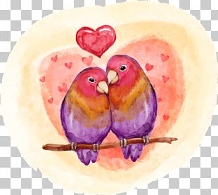Lovebird Valentines Day PNG