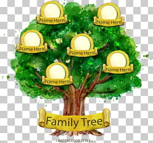 Family Tree Genealogy Illustration PNG