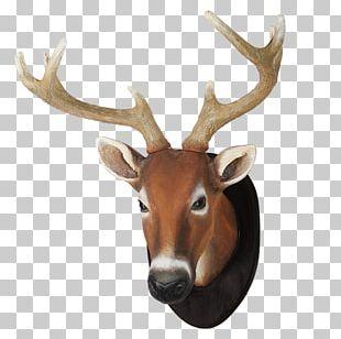 White-tailed Deer Reindeer Elk Antler PNG