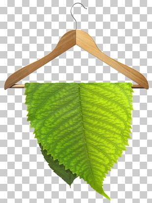 Eco Friendly Dry Cleaning Wet Cleaning Environmentally Friendly PNG