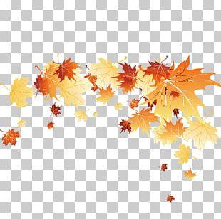 Leaf Autumn Computer File PNG