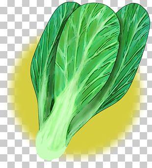 Spring Greens Chinese Cuisine Vegetable Komatsuna Choy Sum PNG