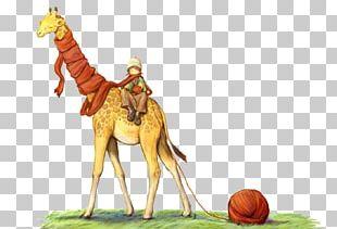 Giraffe Cartoon Illustration PNG