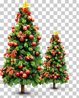 New Year Tree Christmas Tree PNG