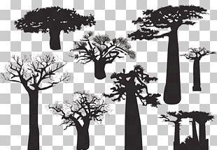 Baobab Tree Silhouette PNG