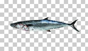 Thunnus Mackerel Sardine Oily Fish Salmon PNG