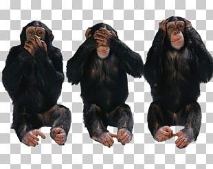 Desktop Forty 2 Days The Billionaire Banker Three Wise Monkeys Mobile Phones PNG
