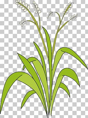 Sweet Grass Cut Flowers Plant Stem Leaf Line PNG
