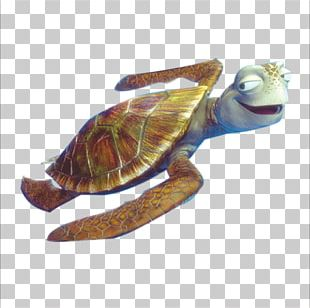 Sea Turtle Crush Finding Nemo PNG
