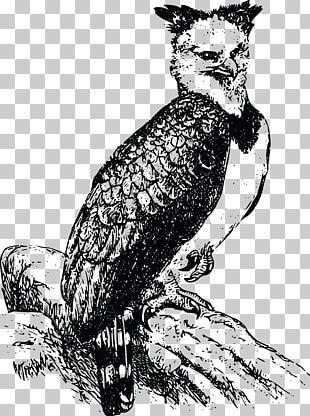 Bald Eagle Harpy Eagle PNG