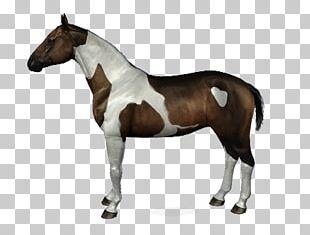 Stallion American Paint Horse Bridle Halter PNG