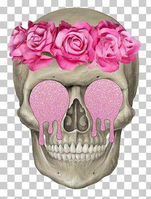 Human Skeleton Skull Axial Skeleton Head PNG