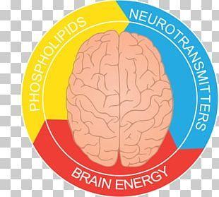 Butter Tart Festival Brain Neurology Organism PNG