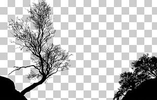 Tree Silhouette Branch PNG