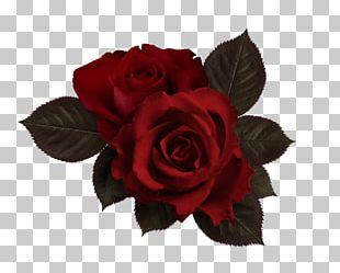 Flower Rose Petal PNG