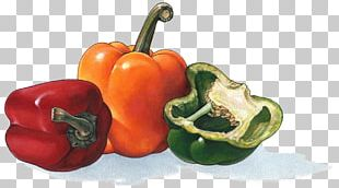 Habanero Bell Pepper Cayenne Pepper Chili Pepper Vegetable PNG