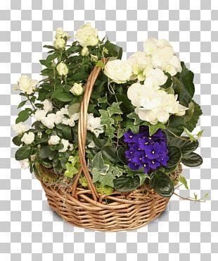 Flower Plant African Violets Floral Design PNG