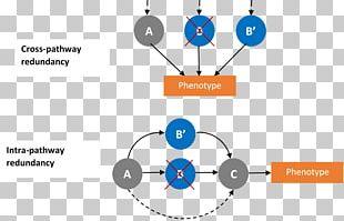 Circle Human Behavior Brand Point PNG