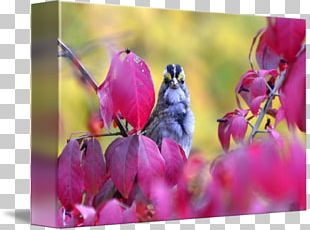 Bud Flowering Plant Plant Stem Close-up PNG