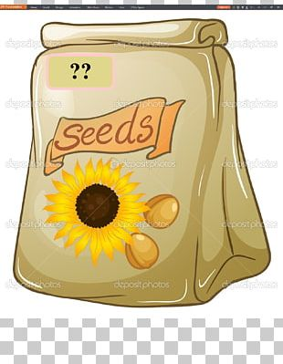 Sunflower Seed PNG