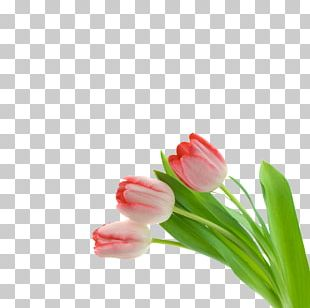 Pink Flowers Tulip PNG