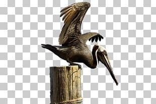 Brown Pelican Sticker PNG