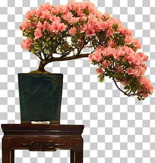Indoor Bonsai Flowerpot Rhododendron Indicum Tree PNG