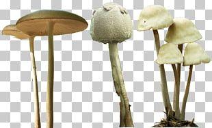 Magic Mushrooms Psilocybe Mexicana Psilocybin Mushroom PNG