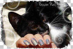 Whiskers Kitten Black Cat Fur PNG