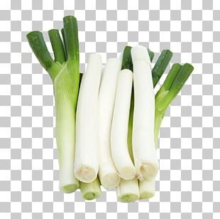 Allium Fistulosum Garlic Shallot Scallion Vegetable PNG
