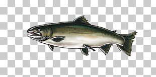 Coho Salmon Chinook Salmon Oily Fish Fish Products PNG