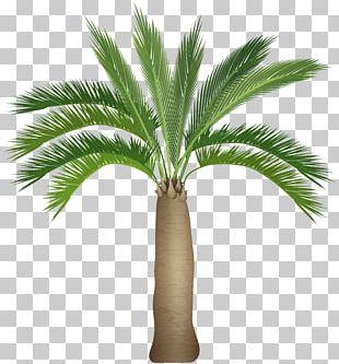 Plant Stem Palm Tree Arecaceae PNG