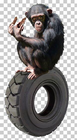 Common Chimpanzee Gorilla Primate Orangutan Gibbon PNG