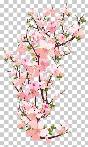 Branch Tree Cherry Blossom PNG