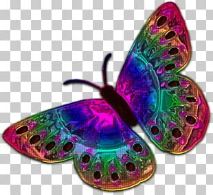Butterfly Insect Pollinator Invertebrate Organism PNG