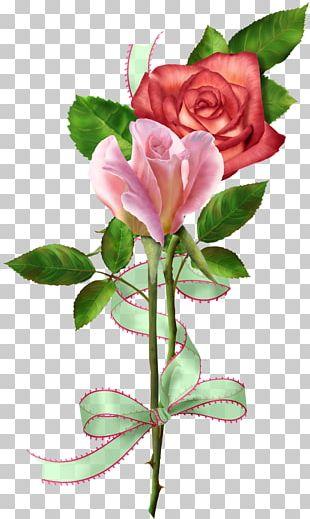 Garden Roses Cabbage Rose Floribunda Cut Flowers Floral Design PNG