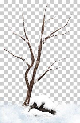 Tree Branch Snow PNG