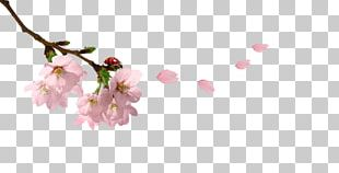 Spring Branch Twig PNG