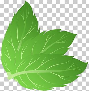 Mint Euclidean PNG