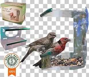 Finch Bird Food Beak Feather PNG