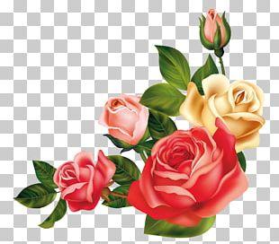 Wedding Invitation Garden Roses Centifolia Roses Flower PNG