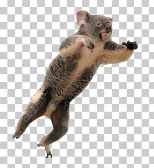Marsupial Fur Terrestrial Animal Snout PNG