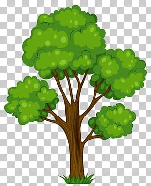 Tree Shrub Cartoon PNG